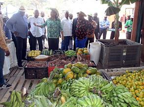 Sobe número de participantes na Feira da Banana do Bengo