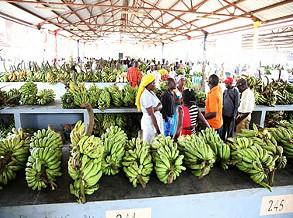 Feira da Banana arranca em Junho próximo