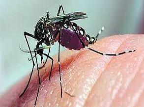 Índia confirma primeiros casos de zika (OMS)