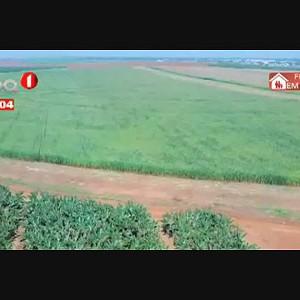 Privatização de fazendas - Cinco investidores interessados na compra