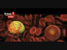"""""""Malária"""" Causas, consequências, prevenção e tratamento da doença"""
