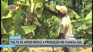 Banana - Falta de apoio reduz a produc?a?o no Cuanza-Sul