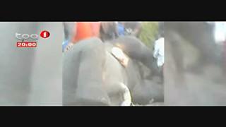 Elefante encontrado morto com sinais de maus-tratos no Caio-Cacongo, Cabinda