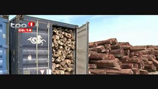 Explorac?a?o ilegal de madeira - Executivo prepara pacote de medidas mais duras