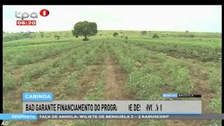 Cabinda - BAD garante financiamento do programa de desenvolvimento agri?cola