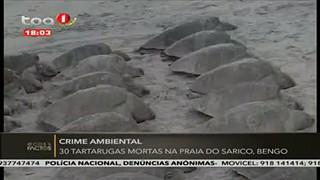 30 tartarugas mortas na Praia do Sarico, Bengo