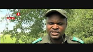 Caça Furtiva - Sete Elefante abatidos no parque do Luengue - Luena
