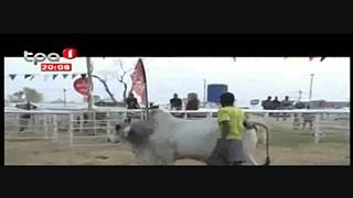 Leilão de gado cria negócio de mais de 1 milhão de dólares