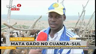Falta de Vacinas-Mata gado no Cuanza-Sul