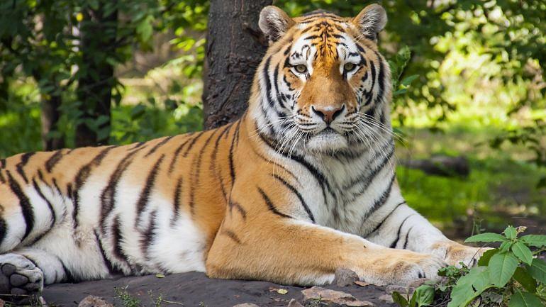 5 histórias de comportamentos estúpidos de homens que levaram à morte de animais em zoos
