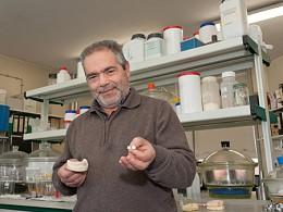 Investigadores da Universidade de Aveiro produzem coroas dentárias mais baratas e resistentes