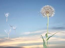 Sabe tratar as suas alergias respiratórias?