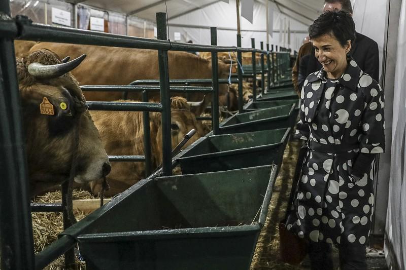 Bloco chama ministra da Agricultura ao parlamento para esclarecer atrasos na lei sobre animais circenses