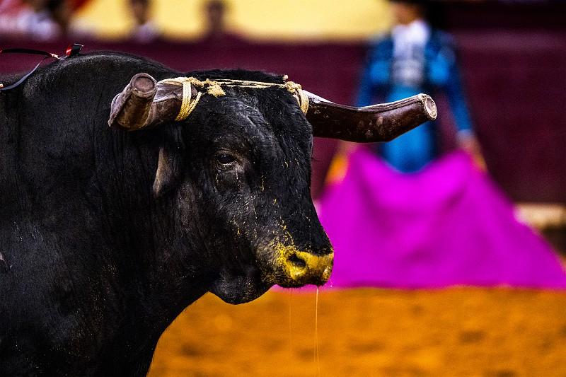 Tribunal valida decisão da Câmara da Póvoa de Varzim em não licenciar tourada