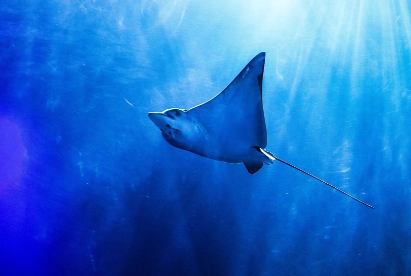 Portugal é o terceiro país europeu que mais captura tubarão e raia, os