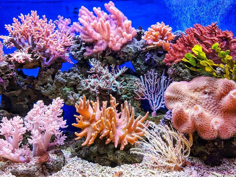 """""""Mergulhe"""" numa aventura interativa ao mundo subaquático dos recifes de coral em Lost Cities"""