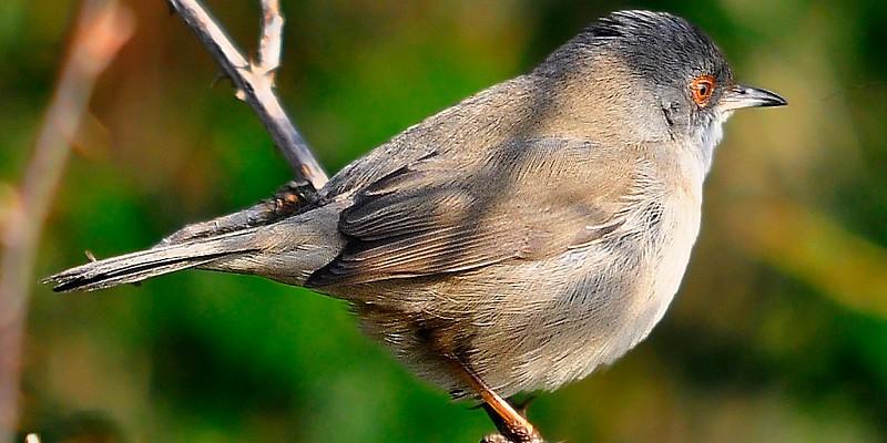 Quer saber as espécies de aves de Portugal? Há um website para isso