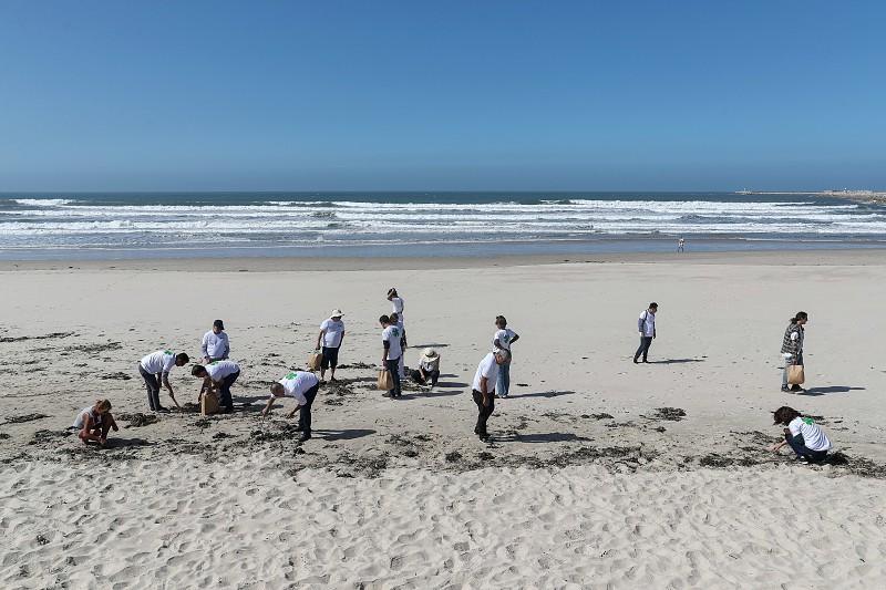 Resultado de imagem para As chuvas de dezembro trouxeram madeira até às praias da Figueira da Foz. A Câmara está a limpar e diz que não multa quem quiser levar