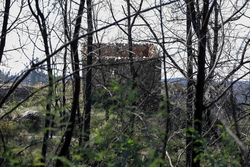 """Incêndios: Governo prevê """"arrendamento forçado das terras"""" caso proprietários não colaborem"""