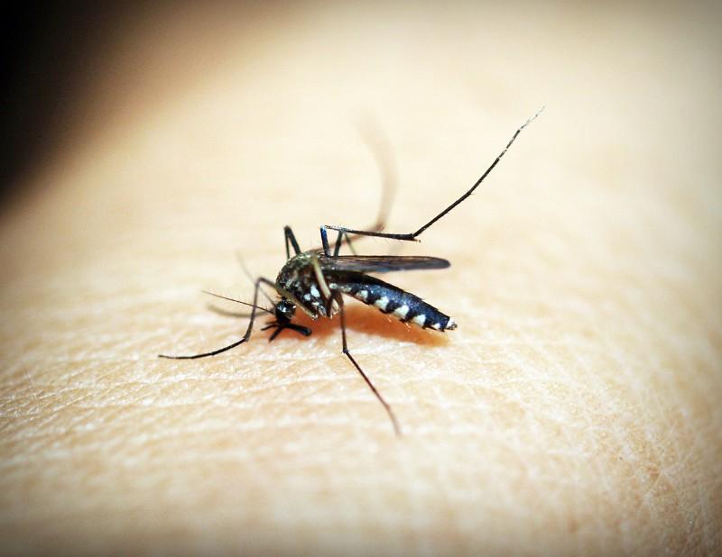 Ativista defende mosquitos.