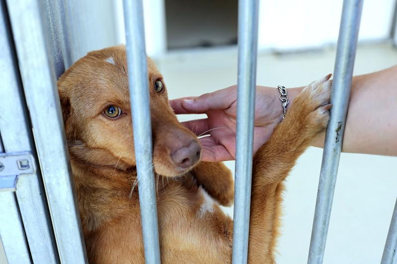 Resultado de imagem para GNR registou mais de 50 queixas por maus-tratos a animais desde o início do ano