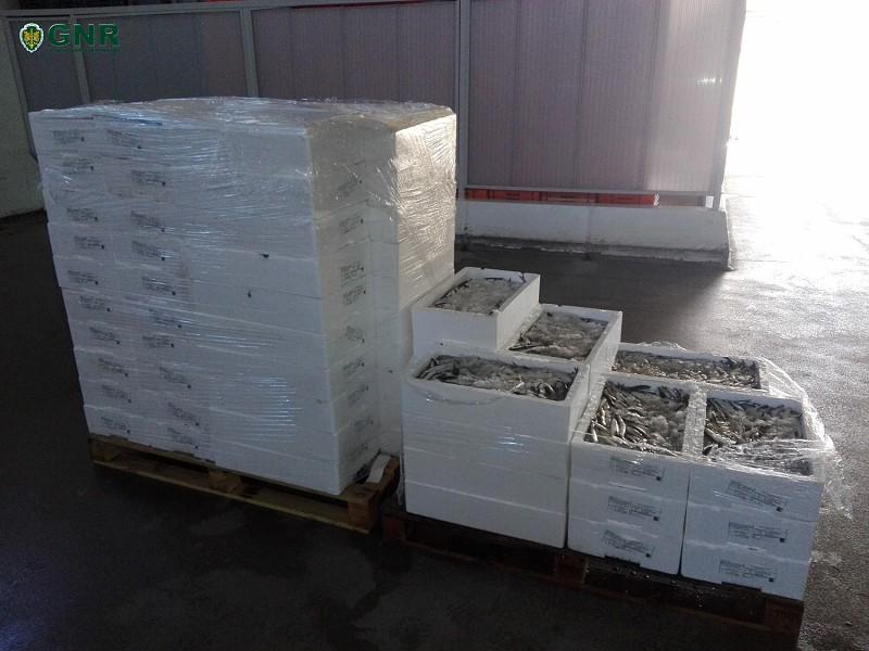 Resultado de imagem para Gafanha da Nazaré: Apreensão de 495 quilos de biqueirão por fuga à lota