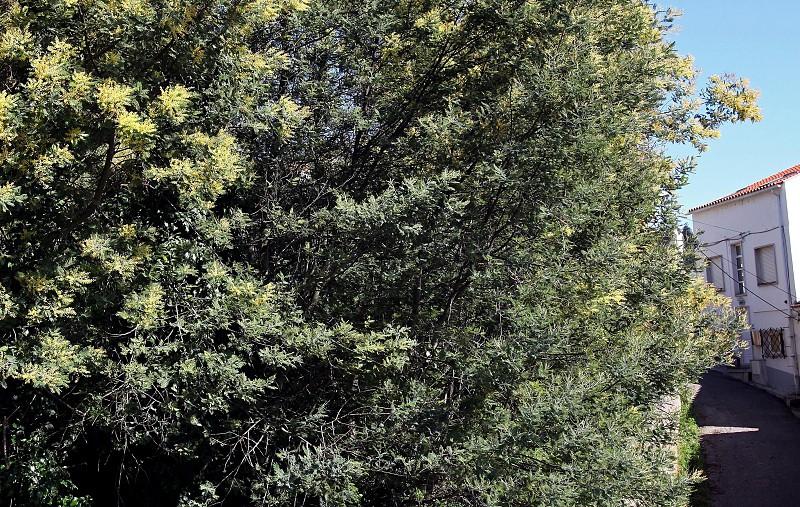 fcfa8025d0 Ambientalistas e técnicos alertam para ameaça das plantas invasoras ...