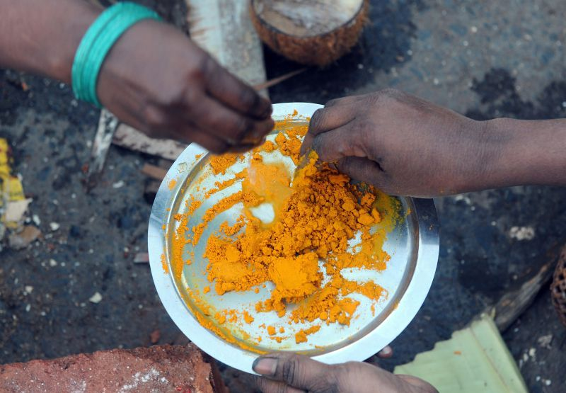 Indian Hindu devotees prepare a paste from turmeric powder during a community function on the occasion of Pongal in Mumbai on January 14, 2013. Pongal is a thanksgiving or harvest festival celebrated by people hailing from the Indian state of Tamil Nadu. Pongal-which coincides with the Hindu festival Makara Sankranthi and is celebrated throughout India as the winter harvest, is usually held from January 13–16. AFP PHOTO/ INDRANIL MUKHERJEE - Açafrão-da-índia, uma especiaria medicinal