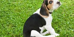 As raças de cães mais amigas da família