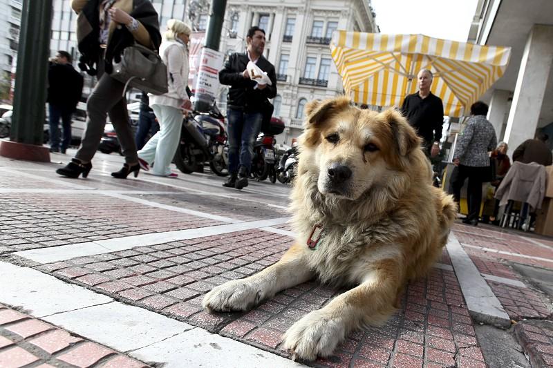 Resultado de imagem para A partir de maio, os animais de estimação vão poder entrar em restaurantes