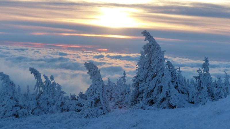 Trees are snow covered on the top of the mountain Brocken, northern Germany, on December 28, 2014. Temperatures reached minus 15 degrees in the night to sunday. AFP PHOTO / DPA / MATTHIAS STRAUß   GERMANY OUT