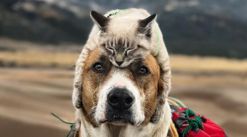 Cão e gato resgatados tornam-se celebridades da Internet por viajarem juntos. As fotos são amorosas