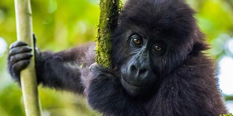 Resultado de imagem para Lista Vermelha de Angola tem 30 espécies ameaçadas de extinção e três já extintas