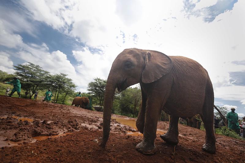 26 elefantes mortos em três meses em reserva natural no Quénia
