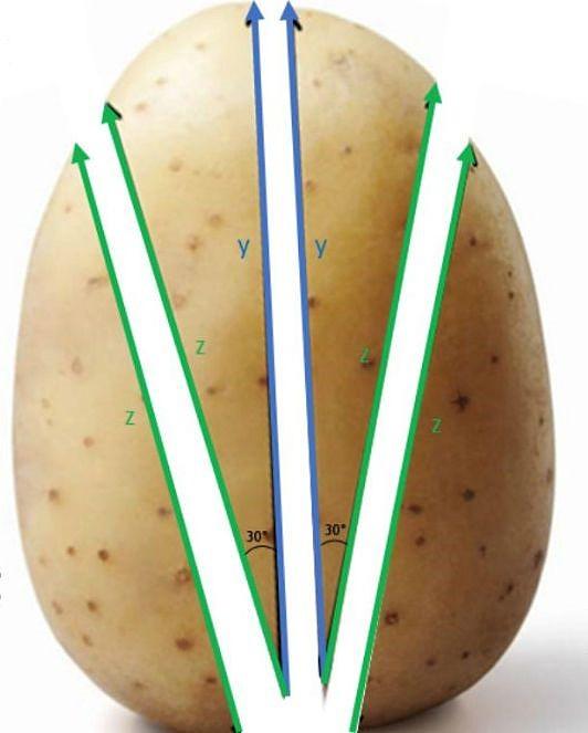 Estudantes ingleses de hotelaria acreditam ter encontrado o corte de batata perfeito