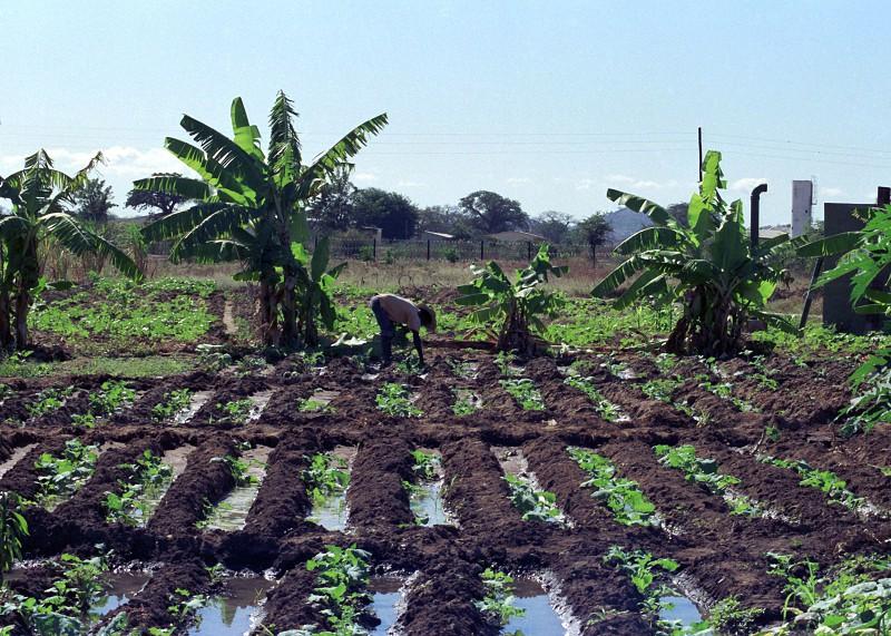 Banco Mundial vai financiar novo programa de irrigação agrícola em Moçambique