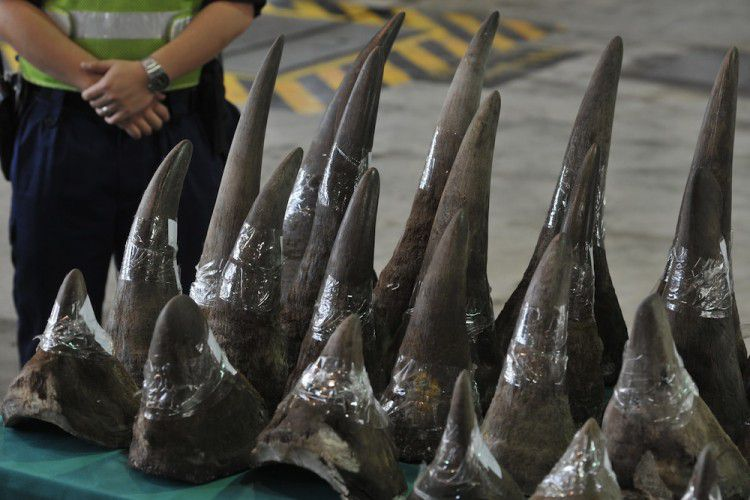 Contrabandistas são presos com 167 chifres de rinoceronte na África do Sul