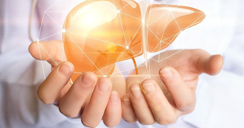 Conhece o seu fígado?  É o filtro do corpo humano