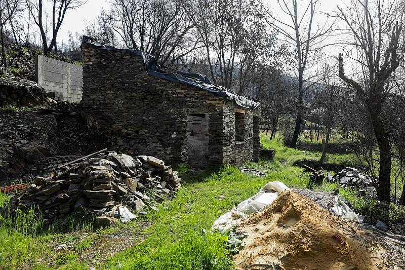 Um ano depois, a população de Benfeita, em Arganil, junta-se para arrancar eucaliptos