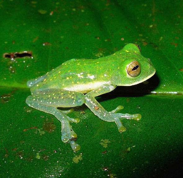descobertas 10 novas espécies de anfíbios na colômbia actualidade