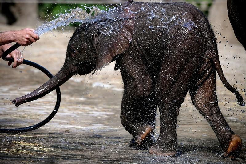 Botsuana volta a permitir caça de elefantes no país