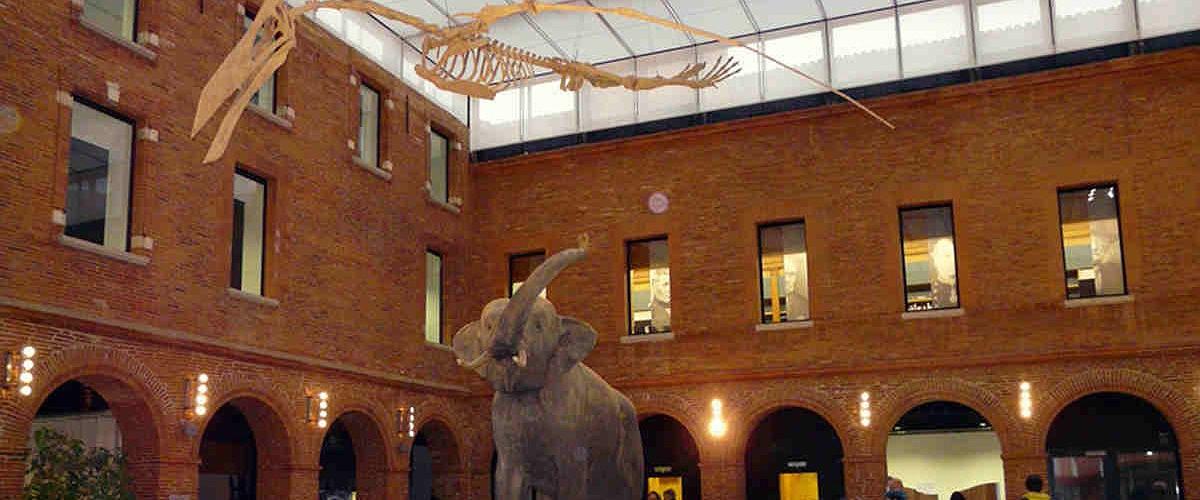 Museu Toulouse