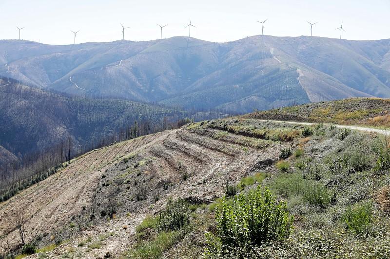 Aldeia na Serra do Açor cria cortina de 30 hectares para a história não se repetir