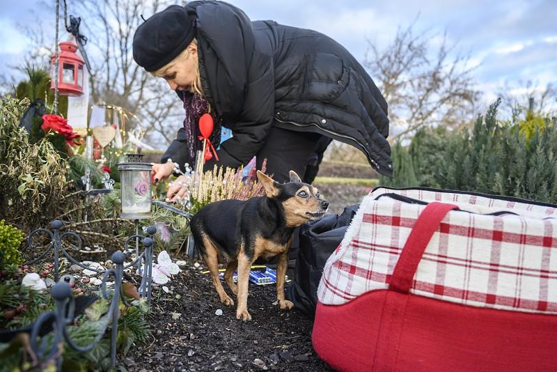 Resultado de imagem para Todos os cães merecem o céu e um túmulo em um cemitério na Alemanha