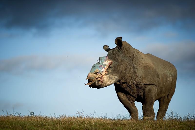Apreendidos 125 quilos de corno de rinoceronte no Vietname