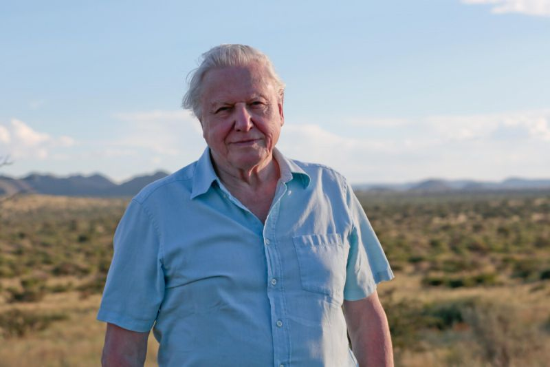 David Attenborough dá voz a nova série da Netflix