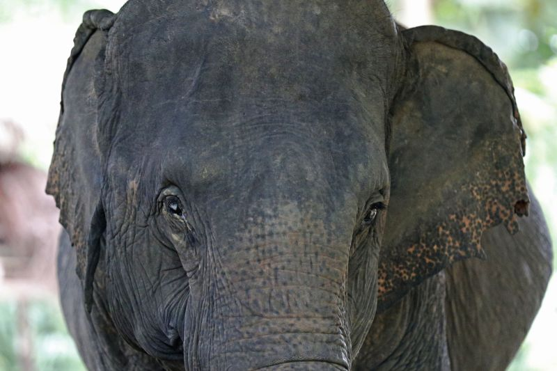 Quase 100 elefantes mortos nas últimas semanas no Botsuana