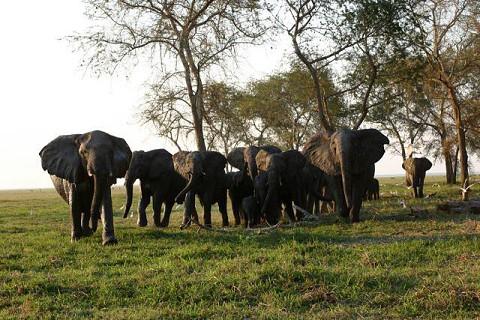 Elefantes | Elephants