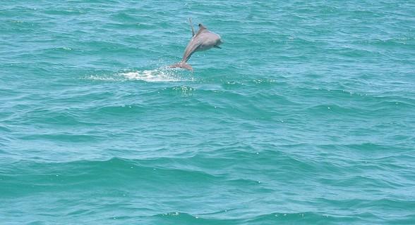 Golfinhos em Sta. Carolina