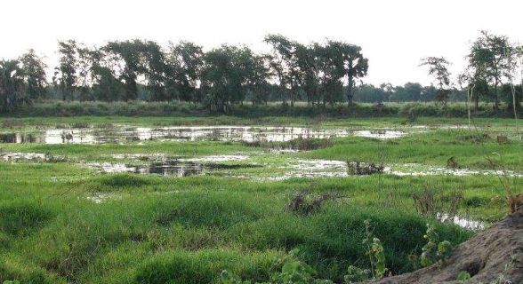 Gorongosa pond